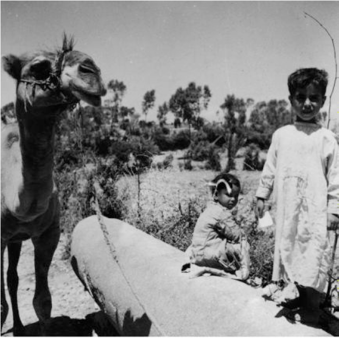 Camel with two children and what looks like a column laying down