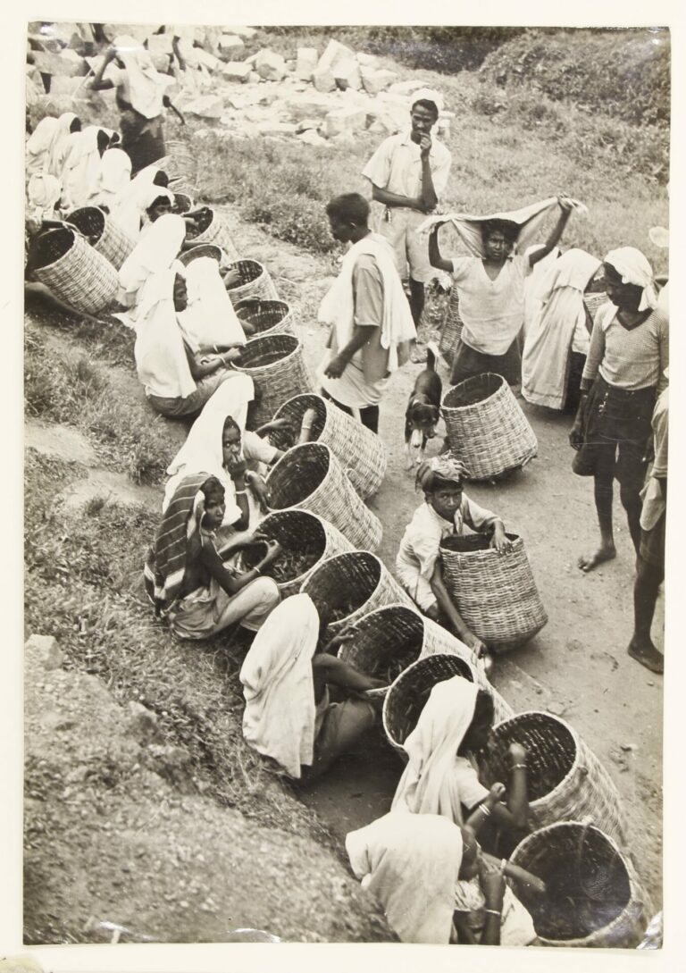 Most of the workers are seated, some are standing, all with very large open-mouthed baskets.
